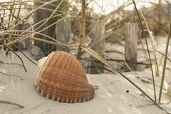 Snäckskal på kusthavet, sand, våg, gräs, shoreline, strand, skal, hav Royaltyfri Foto