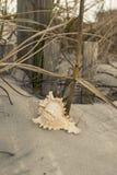 Snäckskal på kusthavet, sand, våg, gräs, shoreline, strand, skal, hav Royaltyfri Fotografi