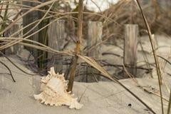 Snäckskal på kusthavet, sand, våg, gräs, shoreline, strand, skal, hav Royaltyfri Bild