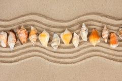 Snäckskal på sanden arkivbilder