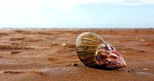 Snäckskal på sanden Arkivfoto