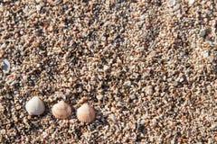 Snäckskal på sanden Arkivbild