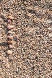 Snäckskal på sanden Royaltyfria Bilder