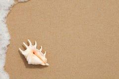Snäckskal på sanden av stranden Fotografering för Bildbyråer