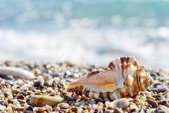 Snäckskal på sanden och Pebble Beach royaltyfria bilder