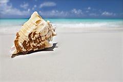 Snäckskal på sandslutet upp nära havet arkivbilder