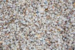 Snäckskal på sandstranden Arkivfoto