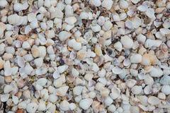 Snäckskal på sandstranden Fotografering för Bildbyråer