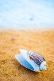 Snäckskal på stranden Royaltyfria Foton
