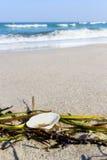 Snäckskal på stranden Fotografering för Bildbyråer