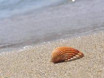 Snäckskal på stranden Royaltyfri Foto