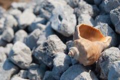 Snäckskal på stranden Royaltyfri Bild
