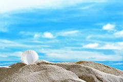 Snäckskal på stranden Arkivfoto
