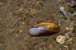 Snäckskal på stranden Arkivfoton