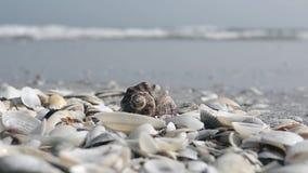 Snäckskal på stranden och havsvattnet på bakgrund stock video