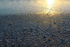 Snäckskal på stranden på solnedgångbakgrund Arkivfoton