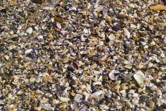 Snäckskal på stranden på soluppgång Royaltyfria Foton