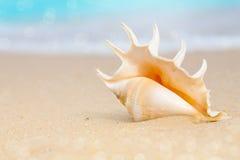 Snäckskal på strandsand arkivbilder