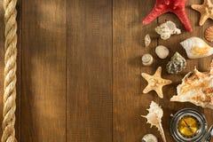 Snäckskal på träbakgrund royaltyfria foton