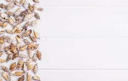 Snäckskal på träbakgrund Royaltyfria Bilder
