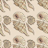 Snäckskal pattern12 Royaltyfri Foto