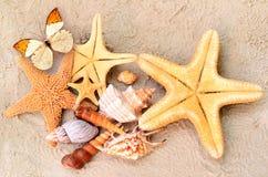 Snäckskal, sjöstjärna och fjäril på sand bränning för sommar för stenar för strandkustcyprus medelhavs- sand Royaltyfria Bilder