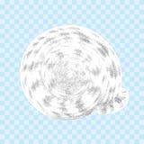 Snäckskal som isoleras på den genomskinliga bakgrunden arkivbild