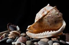 Snäckskal stenar från havet royaltyfria bilder
