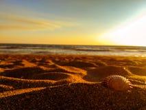 Snäckskal vid strandkusten arkivfoton