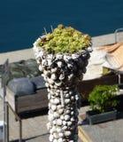 Snäckskalplanter med succulants royaltyfri fotografi
