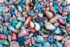 Snäckskalsamling Arkivbild