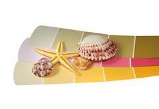 Snäckskalsamling och sjöstjärna på målarfärgchiper Arkivfoto