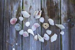 Snäckskalsamling på lantligt trä royaltyfri bild
