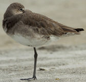 Snäppa på den Redington stranden Florida Royaltyfria Foton