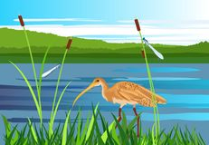Snäppafågel, sjö, gragonflies, våtmarker royaltyfria bilder