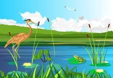 Snäppafågel, sjö, gragonflies, våtmarker royaltyfri fotografi