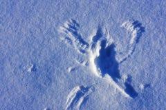 Snöängel fotografering för bildbyråer
