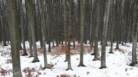 Snö över skogen stock video