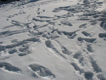 Snö Royaltyfri Foto