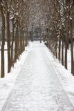 Snö Arkivfoton