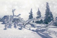 Snö Royaltyfri Fotografi