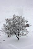 Snö Royaltyfria Foton