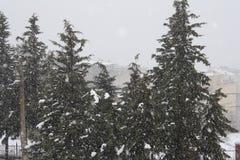 Snö Algeriet Royaltyfri Fotografi