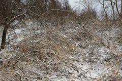 Snö-destinerad flank royaltyfri fotografi