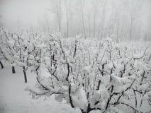 Snö dolda Kashmir Arkivfoto