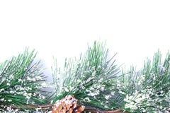 Snö dolda Pinecones royaltyfri bild