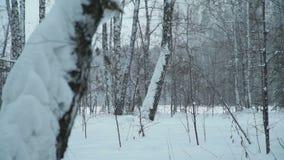 Snö driver i skogen lager videofilmer