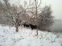 Snö eijsderbeemden Arkivbild