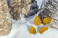 Snö för höstsidor Arkivfoton