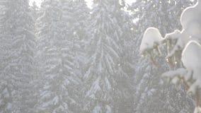 Snö faller framme av solljus Snöflingor i Forest Snow som täckas för att sörja träd i berg under vinter Snöig morgon i na lager videofilmer